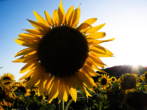 The endless sunflower fields near Rimini, in Emilia Romagna, were unforgettable.