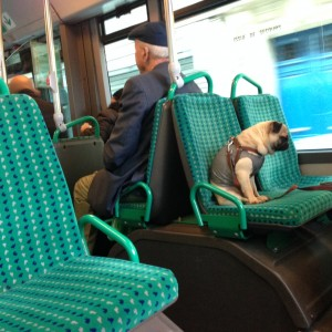 dog on bus in paris